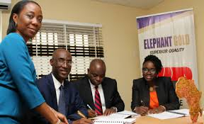 AfricInvest and Elephant Gourp execs