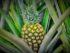 Gold Coast Fruits